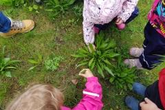Kräuterwanderung mit Kinder